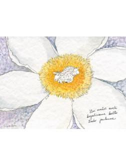 Dvi mažos avelės begaliniame balto žiedo jaukume
